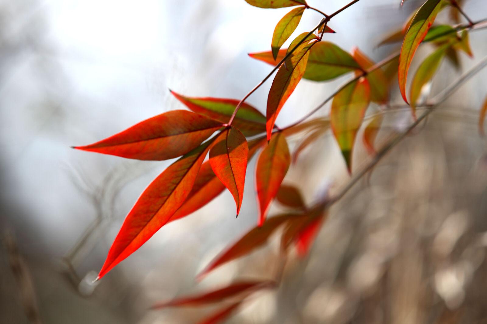 autumn, leaves, fall, fall