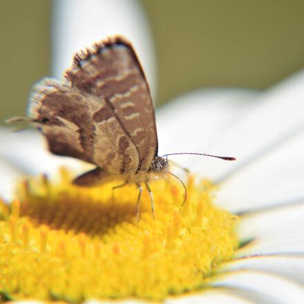 nature, summer, garden, flower, Nikon D3300