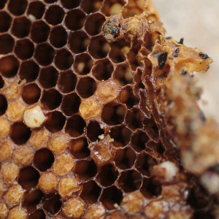 hive, bees, garden, Canon EOS 80D