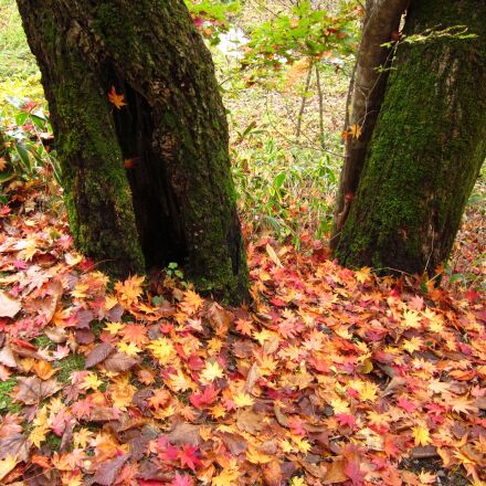 autumn, fallen leaves, wood, Canon IXY 200F