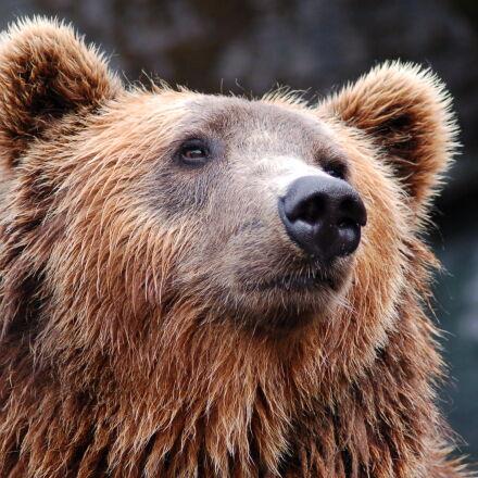 zoo, bear, Nikon D50
