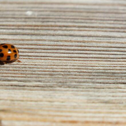 nature, animal, beetle, Fujifilm FinePix HS25EXR