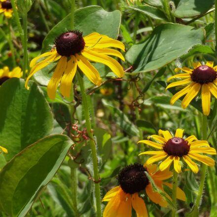 nature, flowers, yellow, Sony DSC-WX150