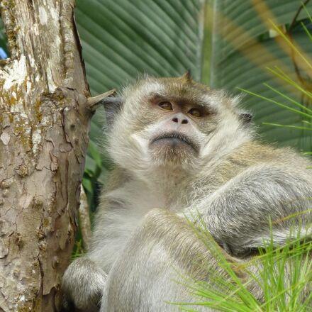 monkey, tree, sit, Panasonic DMC-SZ7