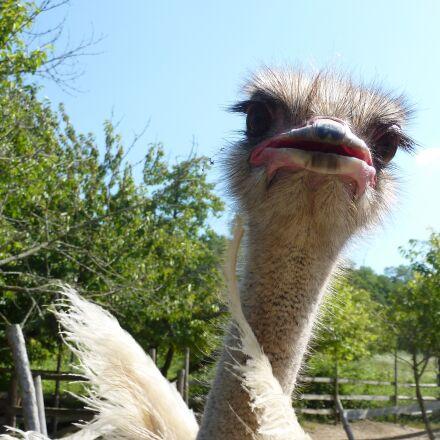 ostrich, the head of, Panasonic DMC-ZS1