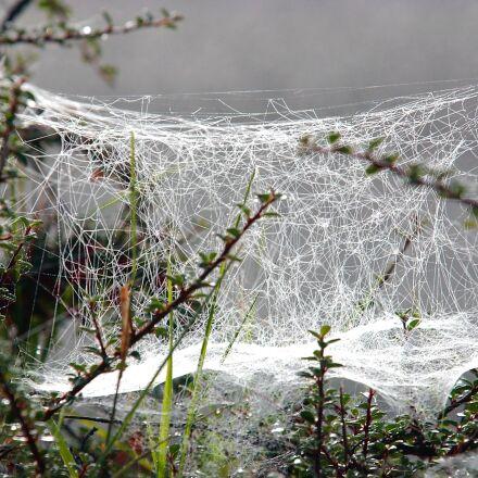 cobweb, winter, frost, Nikon D1H