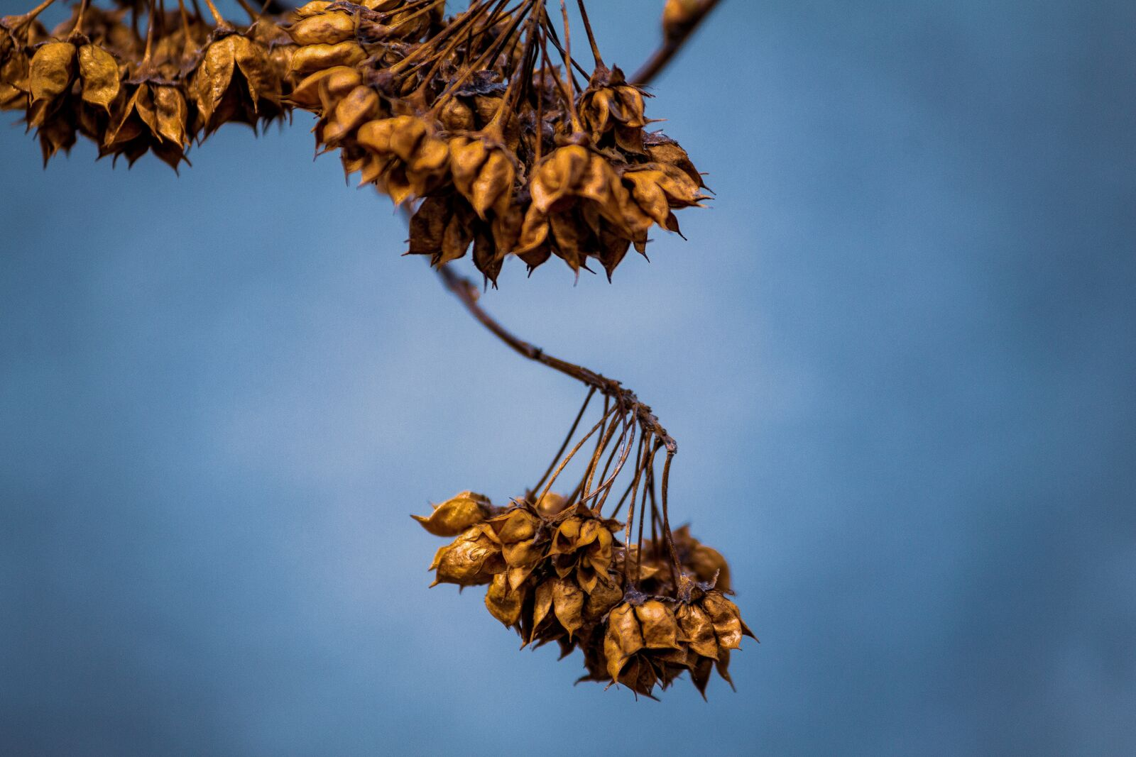 "Canon EOS 60D sample photo. ""Plants, weird plants, trees"" photography"