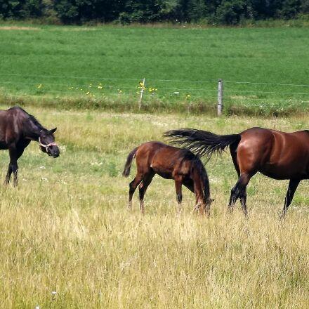 animals, herd, horses, Fujifilm FinePix S3400
