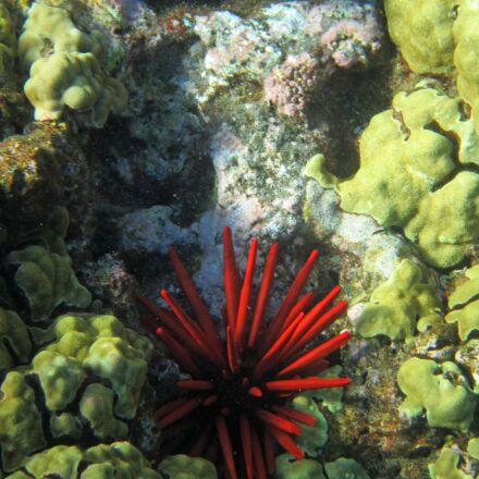coral, hawaii, red, Canon POWERSHOT ELPH 100 HS