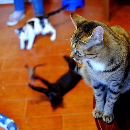 cat, cats, Fujifilm X-M1
