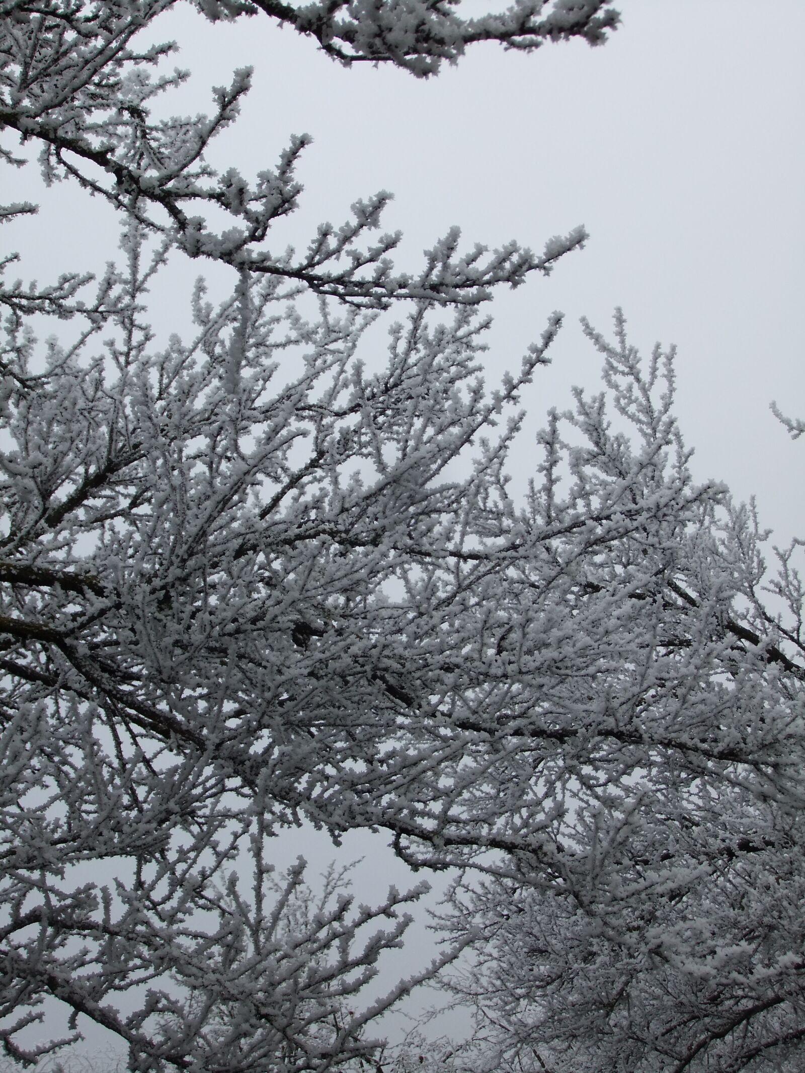 "FujiFilm FinePix JZ500 (FinePix JZ505) sample photo. ""Nature, winter, trees"" photography"