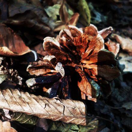 nature, cone, autumn, Panasonic DMC-FS40