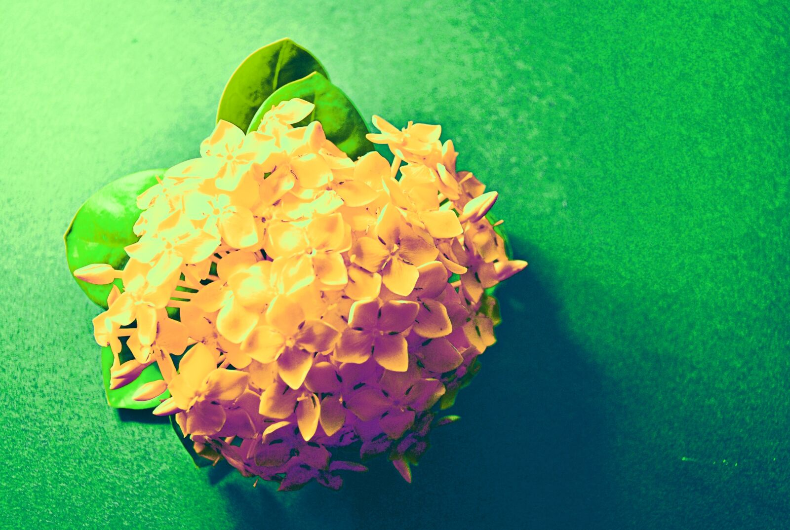 "Nikon D3000 sample photo. ""Flowers, macro, photo"" photography"