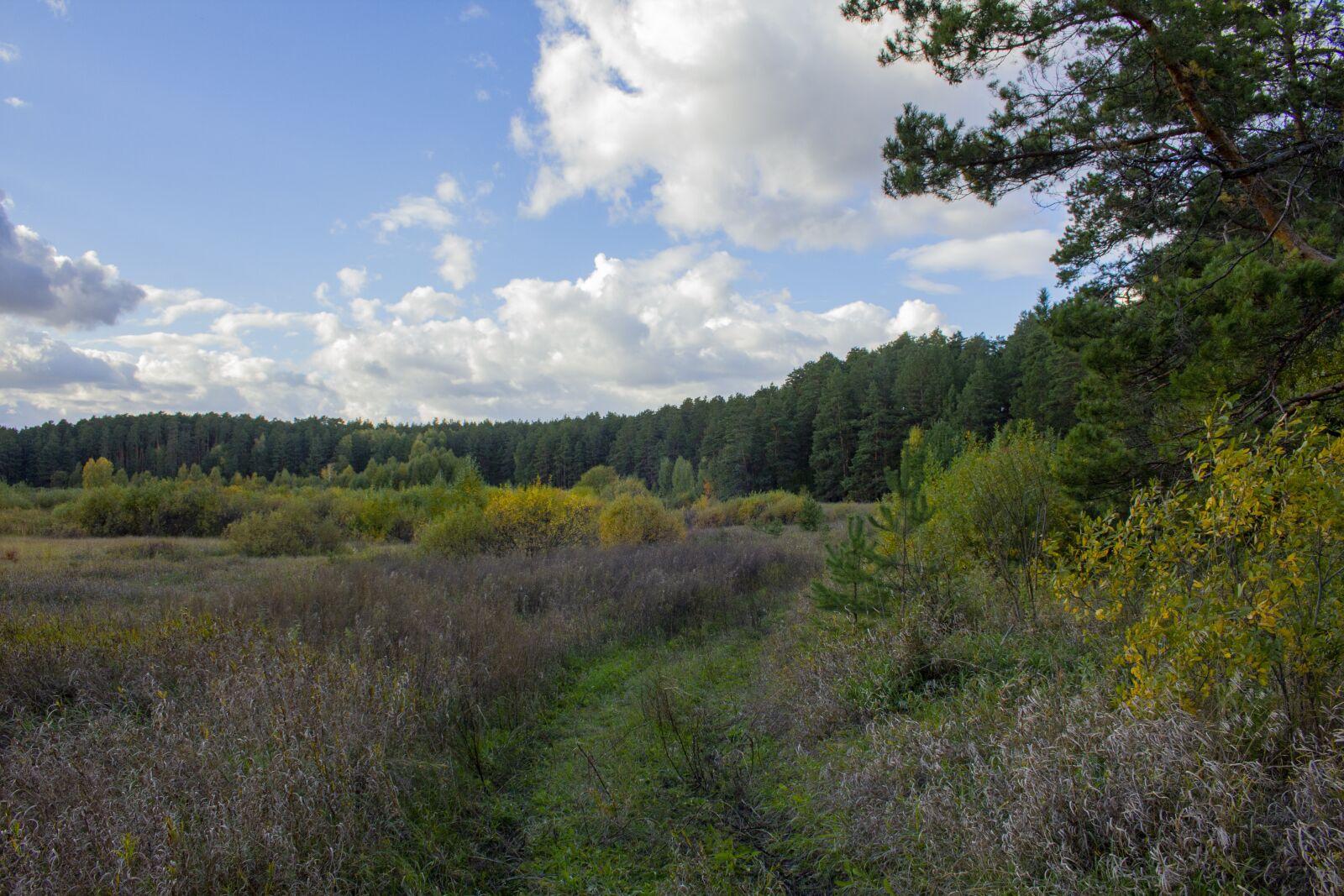 "Canon EOS 60D sample photo. ""Landscape, nature, forest"" photography"