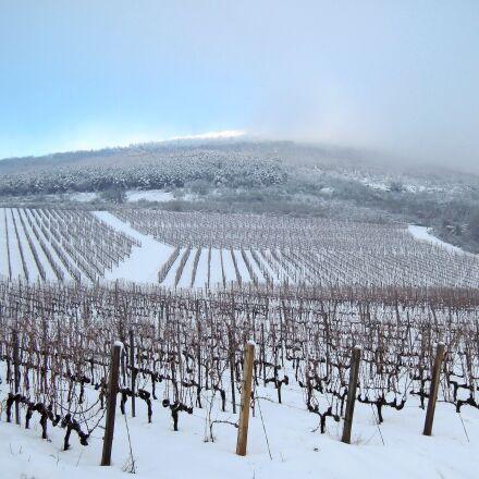 vineyard, grape, winter, Nikon COOLPIX P300
