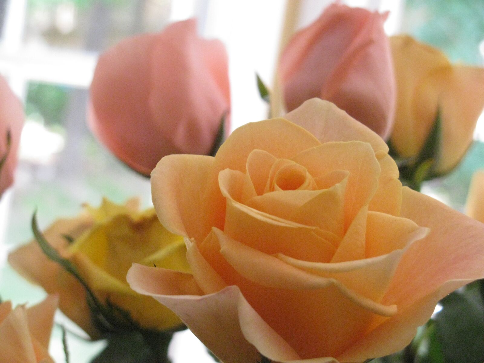 """Canon PowerShot SX110 IS sample photo. """"Roses, bouquet, flowers"""" photography"""