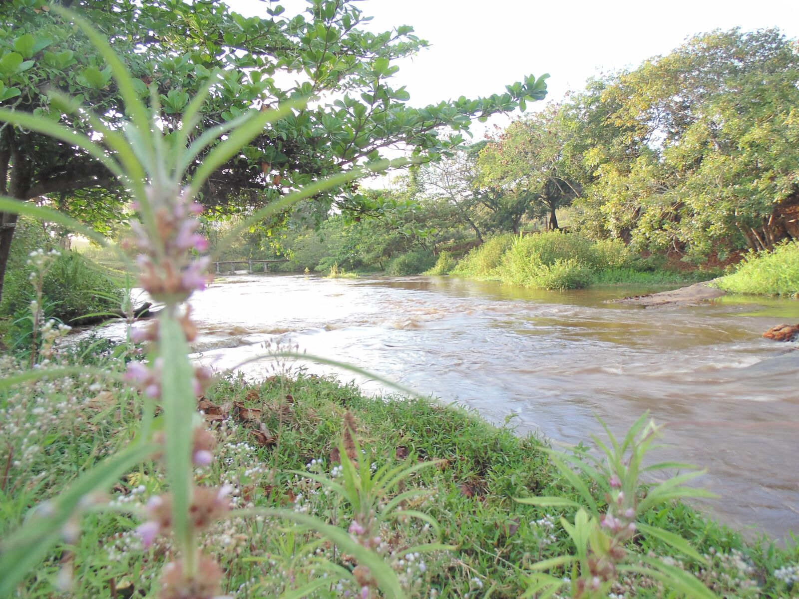 """Sony DSC-H100 sample photo. """"Nature, river, water"""" photography"""