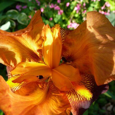 lily, flower, orange, Panasonic DMC-TZ18