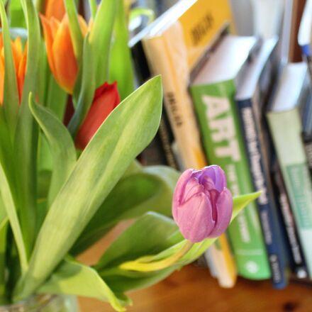 tulips, spring, bulbs, Canon EOS 1300D