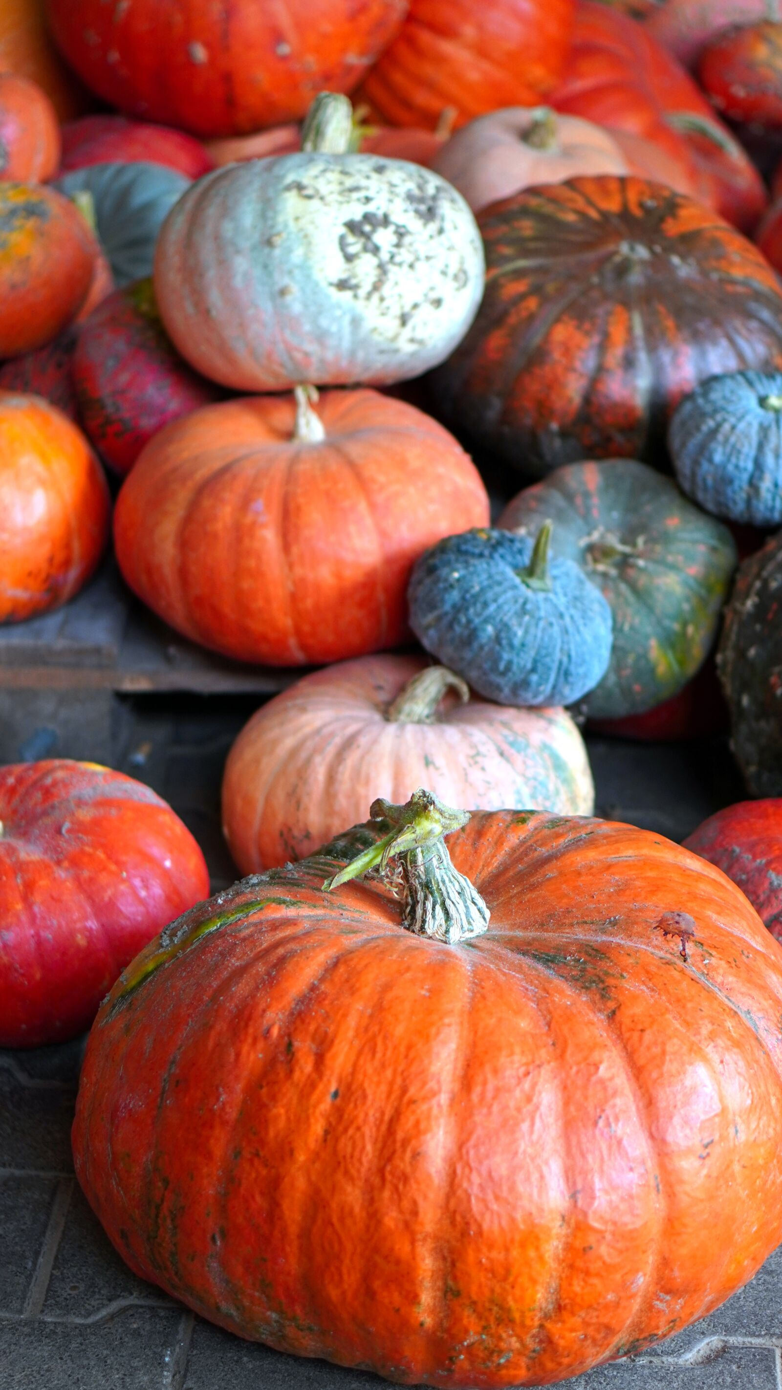 "Sony a6400 sample photo. ""Pumpkins, harvest, vegetables"" photography"