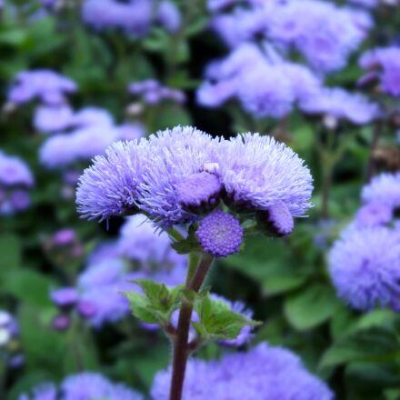 blue v smoke, flower, Fujifilm FinePix S2980
