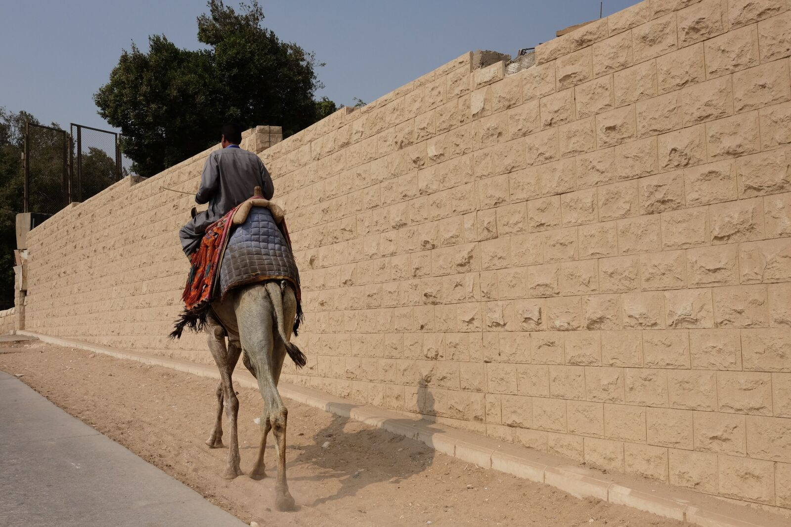 "Fujifilm X-T1 sample photo. ""Horse, street, egypt"" photography"