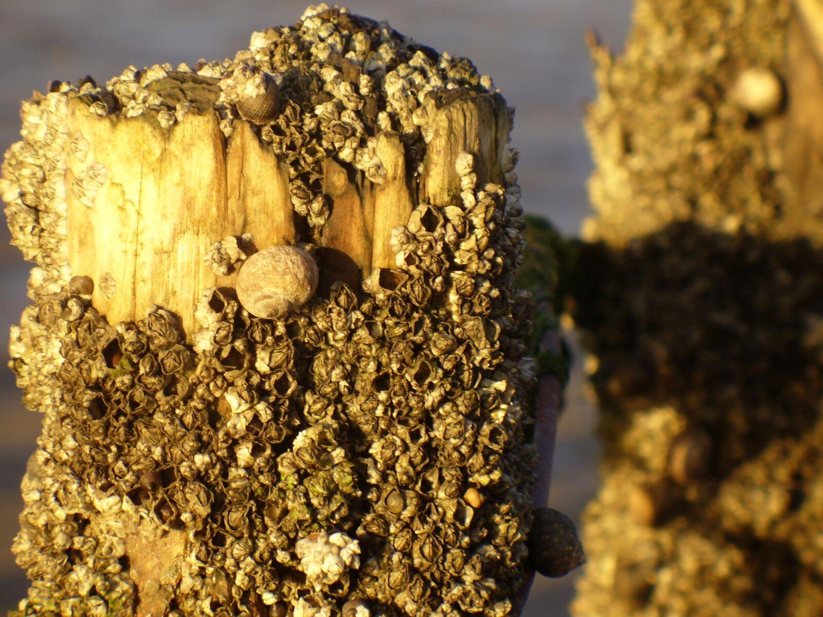 "Panasonic DMC-LZ1 sample photo. ""North sea, piles, mussels"" photography"