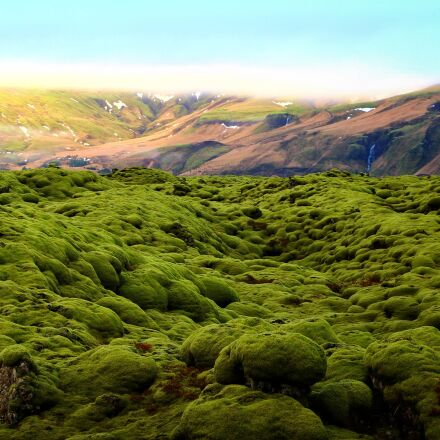 green, moss, scenery, Canon EOS 100D