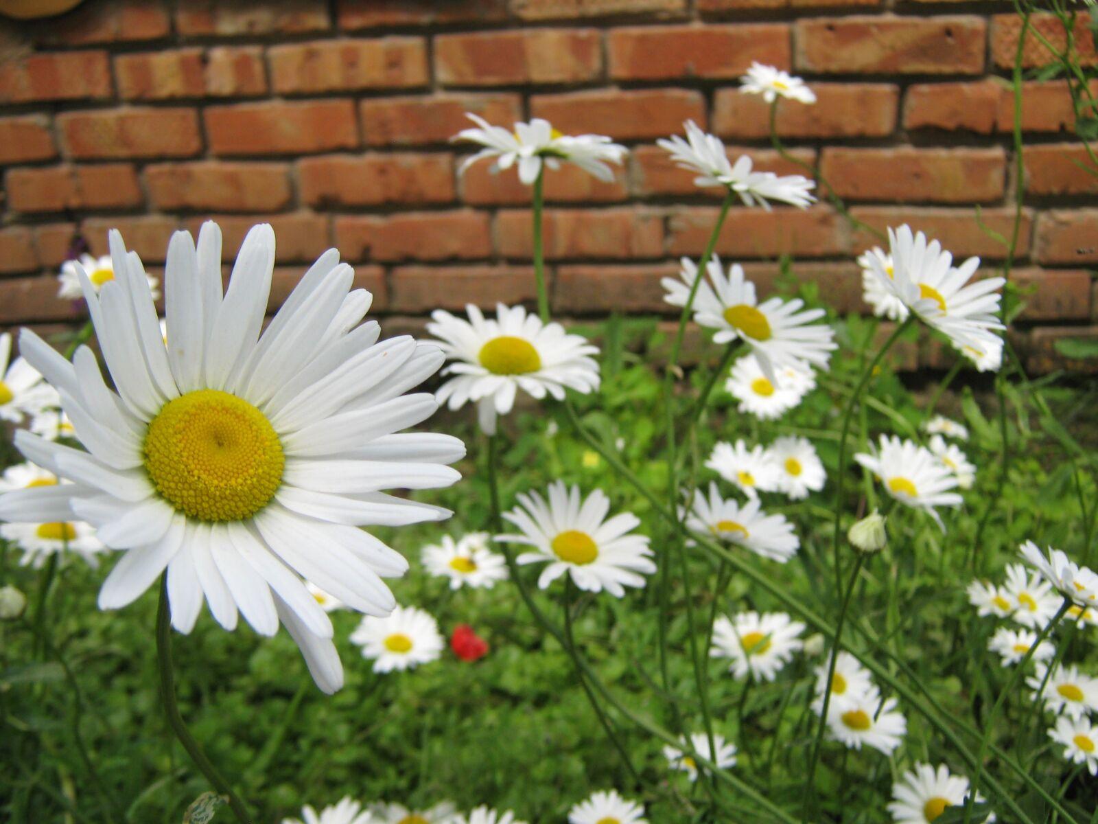 flowers, garden, summer