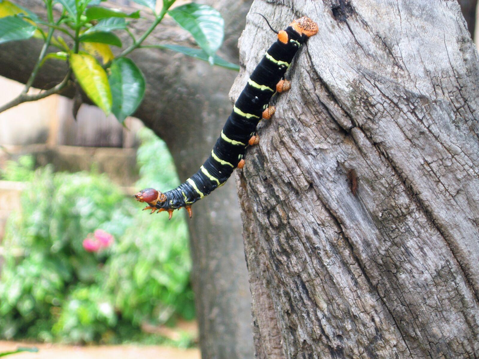 trunk, lizard, raise larvae
