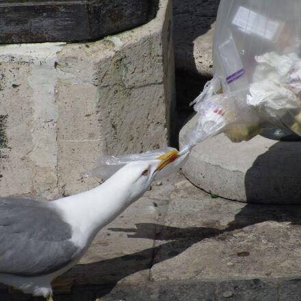 seagull, animals, city, Canon IXUS 155