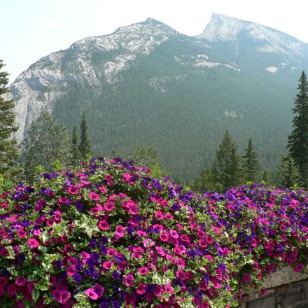 natural, flowers, mountain, Panasonic DMC-FZ5