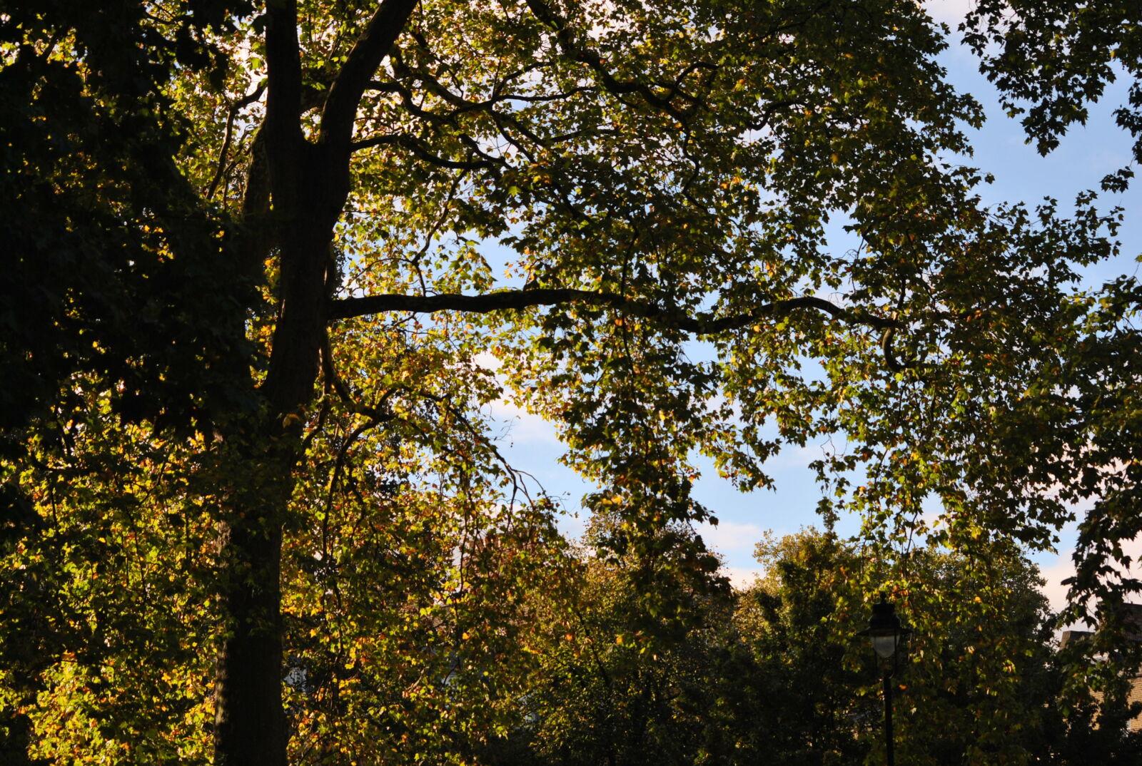 "Nikon D3000 sample photo. ""Autumn, leaves, leaves, trees"" photography"