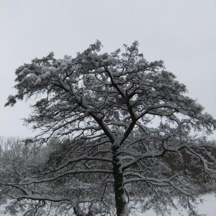 snow, winter, white, Fujifilm FinePix F70EXR