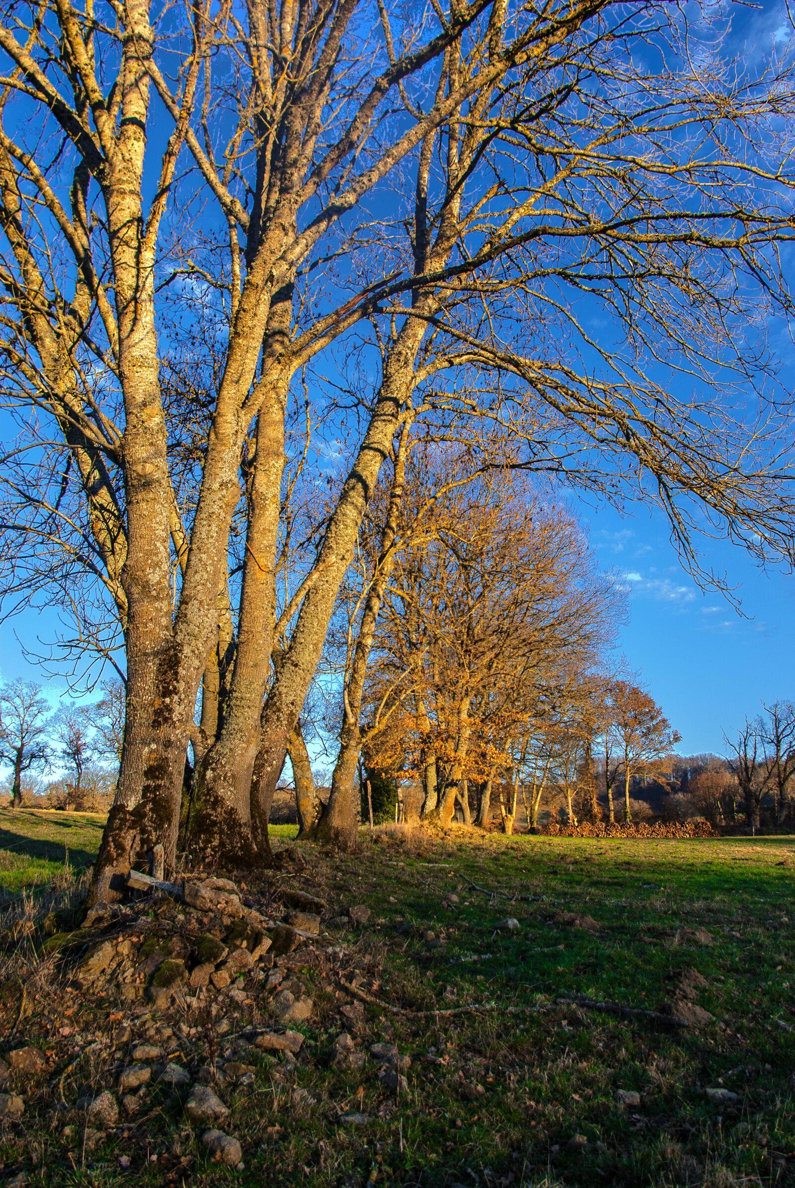"Pentax K10D sample photo. ""Tree, wood, nature"" photography"