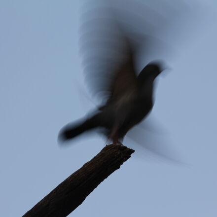 bird, fader, flying, get, Canon EOS 550D