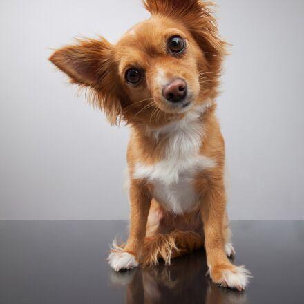 dog, animal, pets, Canon EOS 5D MARK II
