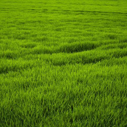 grass, green, meadow, Sony ILCE-6300