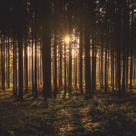 dawn, forest, dusk, Fujifilm X-T1