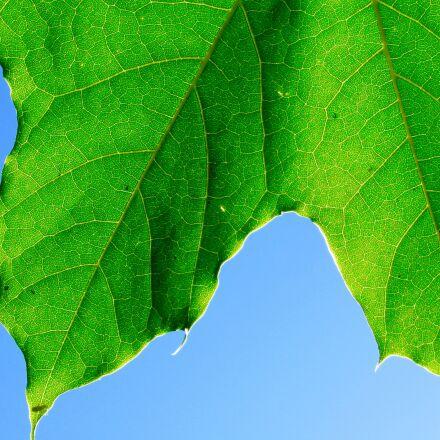 close-up, leaf, nature, Canon POWERSHOT SX520 HS