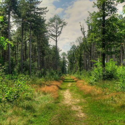polygons forest, polygon wood, Fujifilm X100S