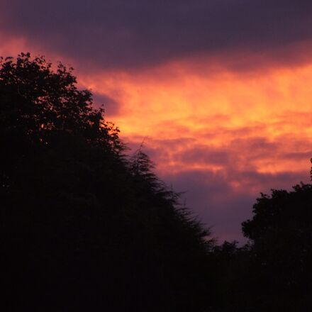 sunset, dark, trees, Fujifilm FinePix S3500