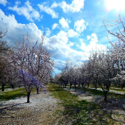 almonds, beautiful, ha, Nikon COOLPIX L830