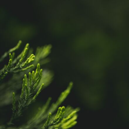 blurry, close-up, leaves, Canon EOS 6D