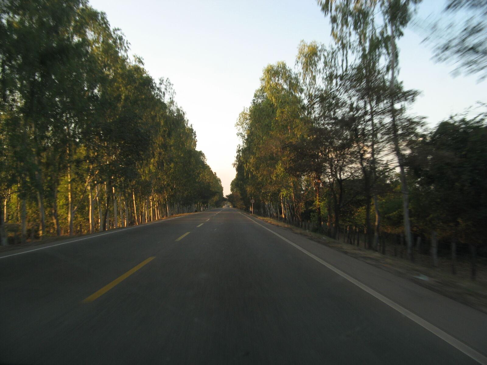 ahead, road, sunset, tree