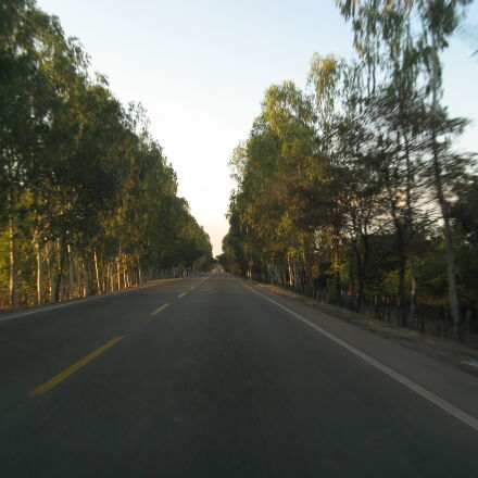 ahead, road, sunset, tree, Canon POWERSHOT A710 IS