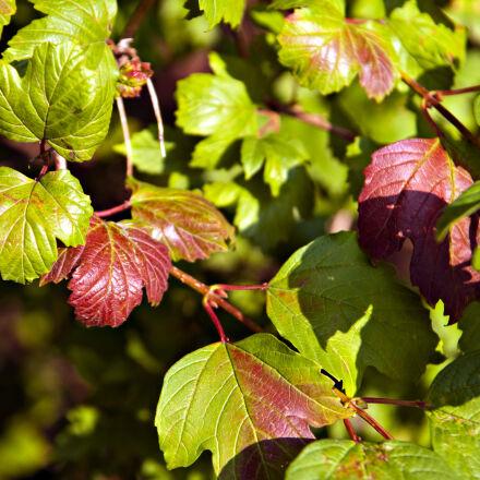 autumn, colors, garden, leafs, Nikon D300S