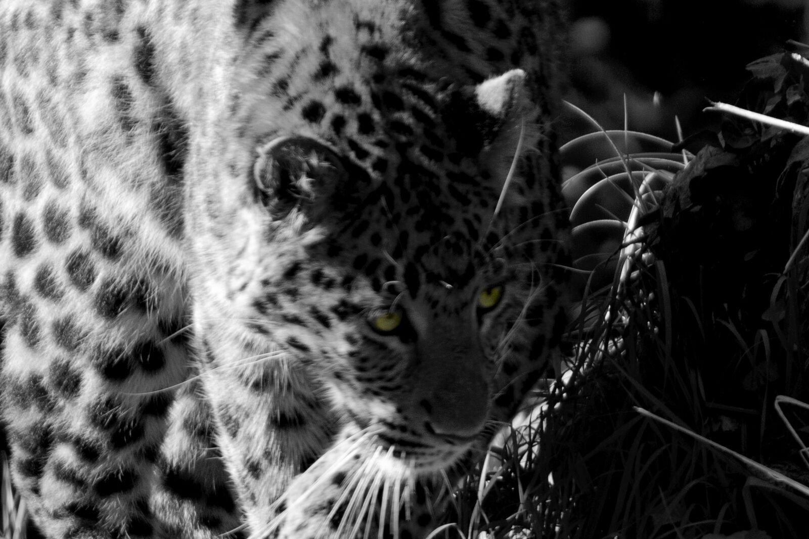 "Nikon D750 sample photo. ""Wildlife, nature, wild"" photography"