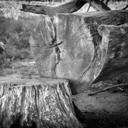 tree, tree stump, log, Samsung NX300M