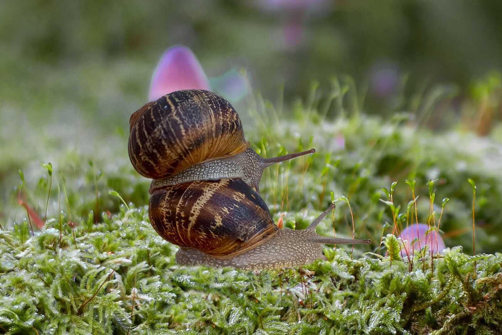 """Canon EOS 7D sample photo. """"Snails, spiral, moss"""" photography"""